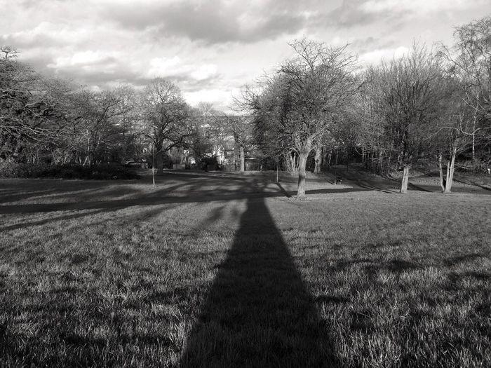 Long shadow of tree in black and white. Beauty In Nature Black Landscape Long Shadow Of Tree Monochrome Nature Outdoors Shadow Of Trees Shadow On Grass Tall Tree Shadow Tree Tree Shadow