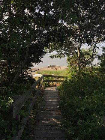Tree Outdoors Nature Day Tranquility Scenics No People Beauty In Nature Sky Footbridge Beach