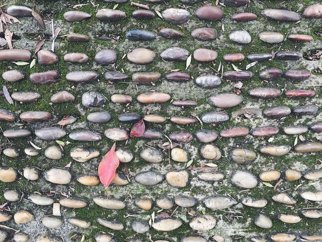 Backgrounds Beauty In Nature Cobblestone Day Freshness Full Frame Growth High Angle View Large Group Of Objects Leaf Lines And Shapes Nature No People Outdoors Red Road