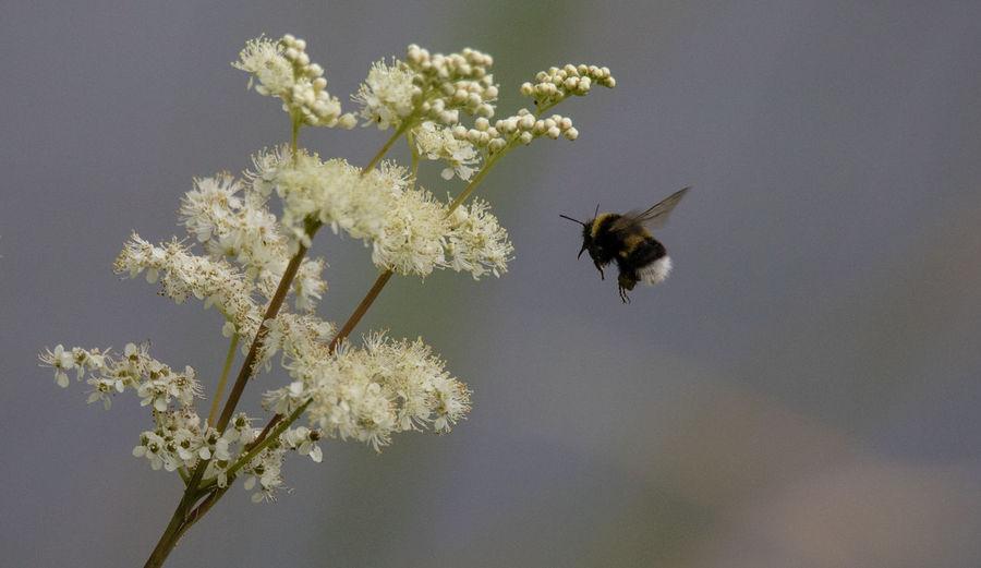 Bee at Warnham