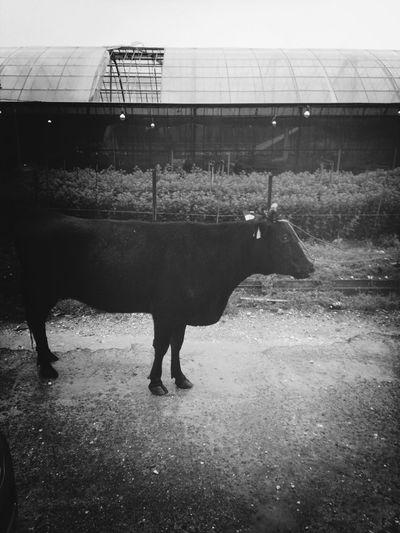 Caw Animals Farm Itoman City