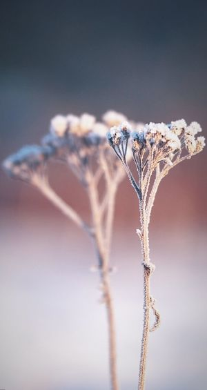 ice flowers Plants And Flowers Frosty Clear Sky Close-up Sky Animal Themes