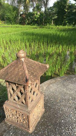 Champs de Riz Rice Bali INDONESIA