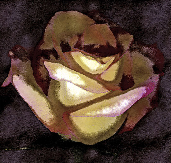 Abstract Photography Abstract, Scanned Rose, Digital Graphics, Di Creative Photography Concept Creative Grapich Digital Concepts Digital Photogram Digitlal Imaging Photo Realism, Abstract Photography, Scanned Oblet Scanned Rose