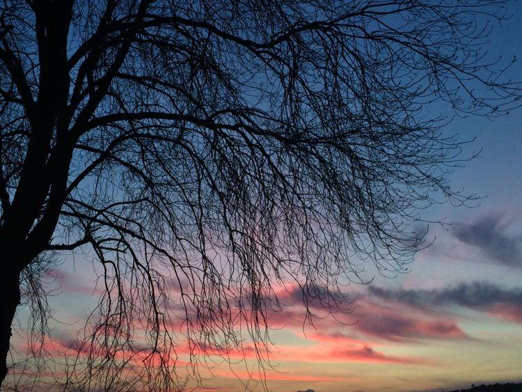 Nubes de algodón, las únicas que no rompen el sueño Sky Collection Skyporn Clouds Clouds And Sky Cloudporn Sky And Clouds TreePorn The Purist (no Edit, No Filter) My Daily Commute EyeEm Nature Lover