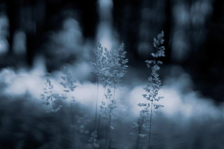 Close-Up Of Frozen Plant