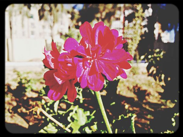 Flower Flower Collection Nature EyeEm Nature Lover