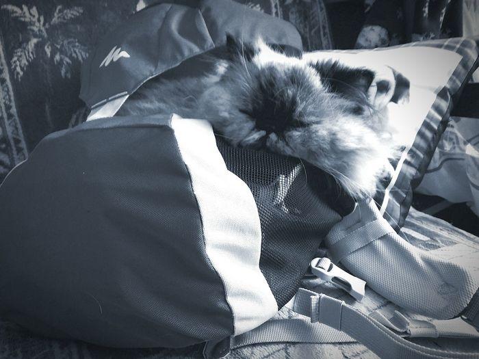 Saint Petersburg Санкт-Петербург Спб Relaxing дома кошка рюкзак ждет Соня спит