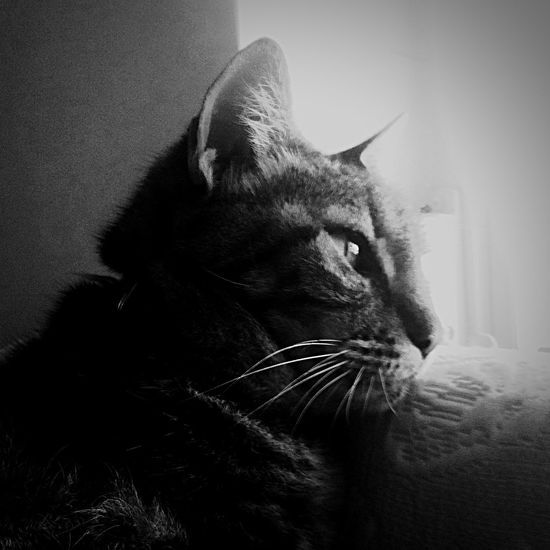 Dreaming EyeEm Best Shots Black And White OpenEdit Cats Cat♡ Cat Lovers Kitty My Cat Shootermag