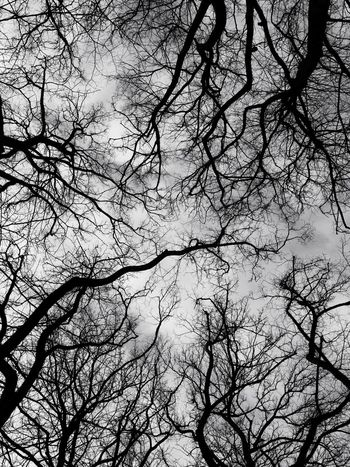 Blackandwhite Bare Tree Low Angle View Branch Tree Nature Beauty In Nature Outdoors No People Sky Tranquility Day