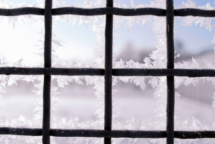 Minsk, Loshica Park Frozen Ice Crystal Snow ❄ Winter Close-up Cold Temperature Nature No People Outdoors
