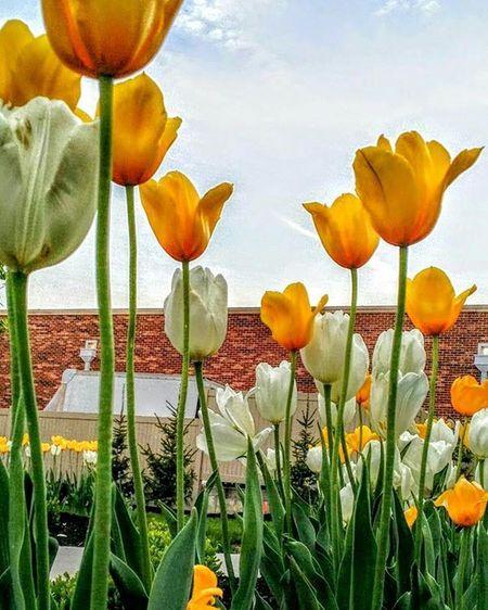 Random flowers surrounding the water fountain by soccer field at Benedictine college. .......Ks_pride Atchison Atchisonks Kansas Kansasnature Worldwide Sunrise_sunsets_aroundworld World_bnw Googleplus Fuckyeah Sunrisagram Wow_america_bnw Googleit