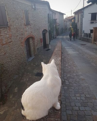 Langhe In The Street Village Street Silence Tranquility Travel Destination Village Cat In The Street Pets Street Domestic Animals Outdoors People One Animal Mammal Animal Themes Day
