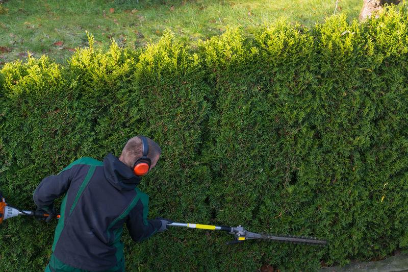 Man pruning plants in garden