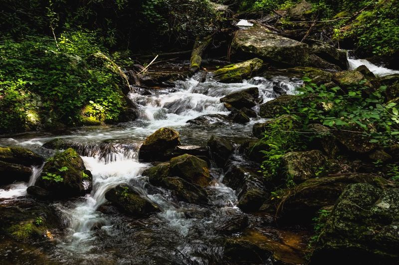 The Great Outdoors - 2017 EyeEm Awards Exceptional Photographs Nature Waterfall Water River Creek Outdoors Tranquility Scenics Backgrounds Forest Beauty In Nature Leaves Green Nature Photography Nature Wallpapers Photo Of The Day Photooftheday EyeEm Best Shots EyeEm Nature Lover Eye4photography