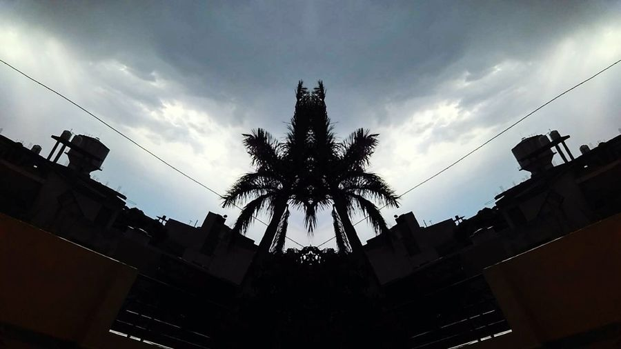 Mirror Picture Mirror Shot Mirrortree Palmtree On A Rainy Day Sky And Clouds Sky_collection Relaxing Moments Welcome To Black