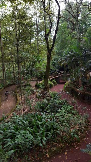 Un paseo por el popular Parque Tecajetes, Xalapa Park Parque  Xalapa De Enríquez Xalapa Mexico Plant Trees Plantas Arboles Nature Nature_collection Urban Nature Walking Ways Caminos Bosque Forest