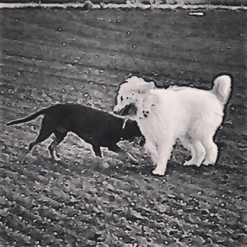 Bestnature Bestdog  Blackandwhitephotografie