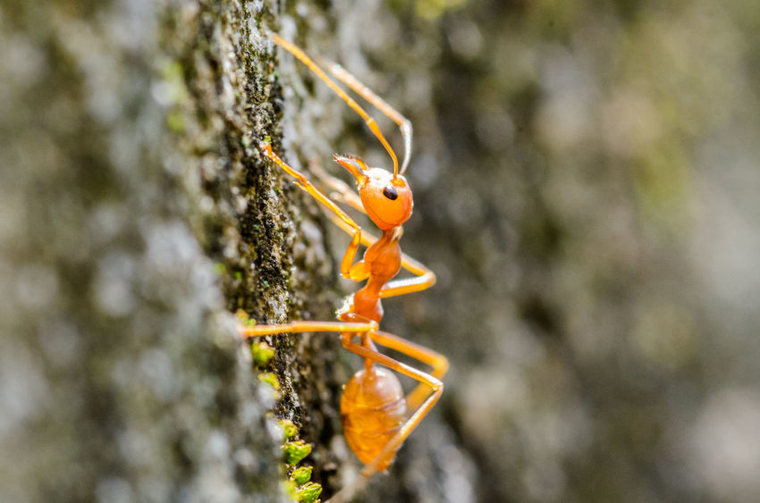 Ant climbing on wards and upwards Ant Close-up Depth Of Field Insect Macro Macro Beauty Nature Orange Selective Focus Tiny Wildlife