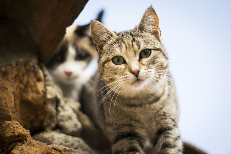 Close-up of cats sitting by rock