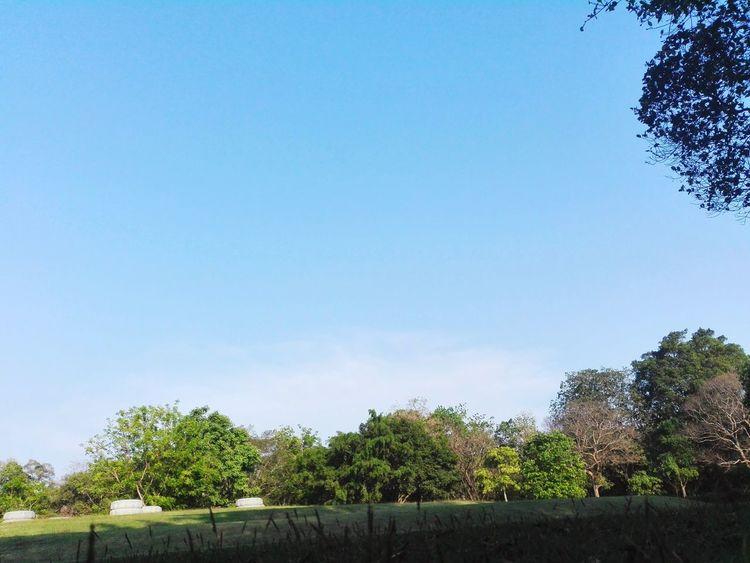 Tree Blue Sky Clear Sky Nature Day Beauty In Nature Outdoors Beauty In Nature Lifestyles Natural Beauty Photo♡ Tree Nature