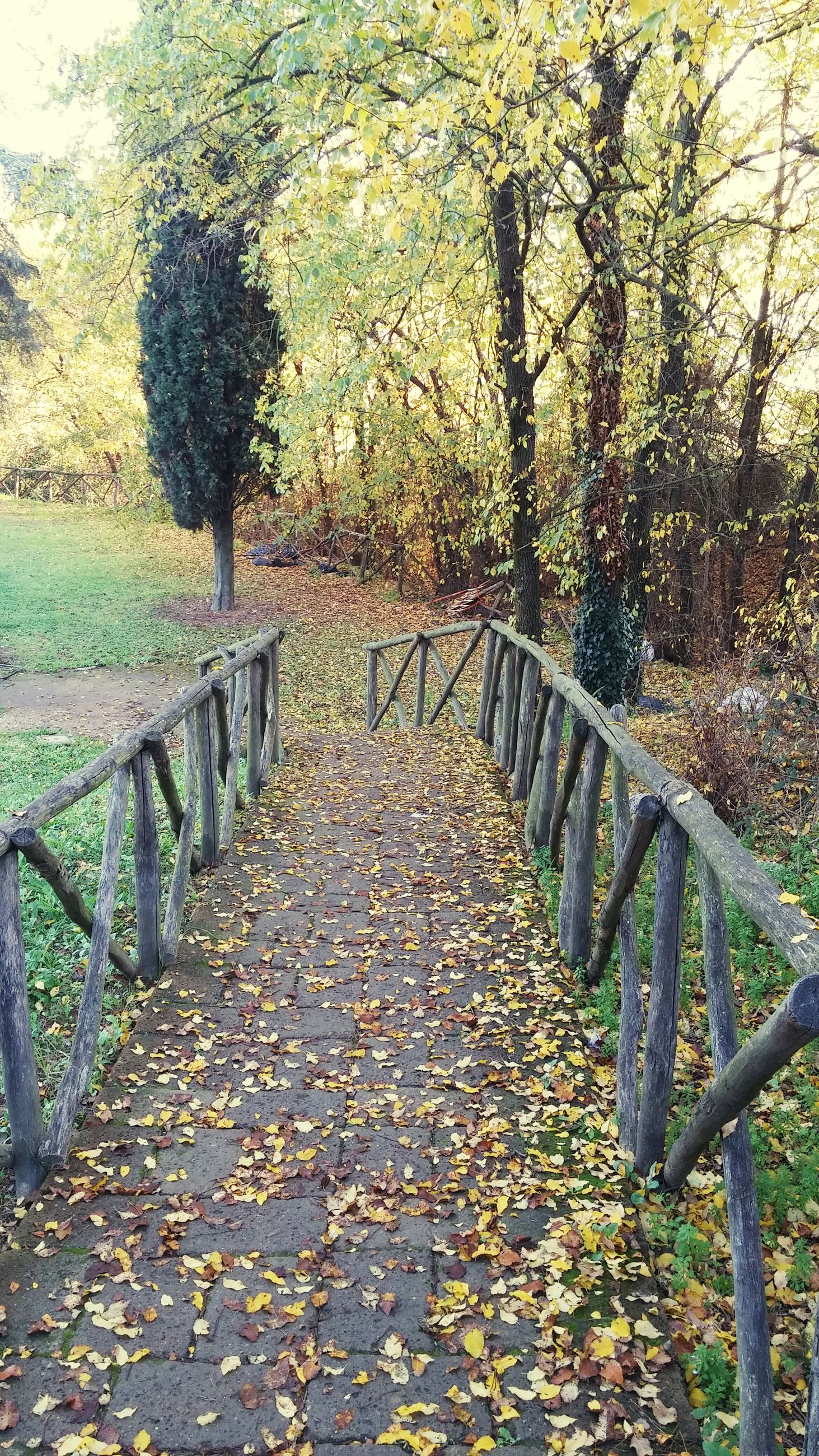 the way forward, tree, diminishing perspective, tranquility, railing, autumn, growth, nature, vanishing point, leaf, footbridge, footpath, change, tranquil scene, walkway, wood - material, pathway, beauty in nature, park - man made space, branch