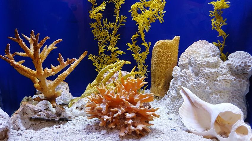 Sea Life Underwater UnderSea Nature Coral No People Biology Beauty In Nature Close-up Outdoors Day Aquarium Fish Aquarium Photography Aquatic Life Nature Aquatic Sea UnderSea Blue Water Multi Colored Aquarium Life Aqua Swimming Aquarium