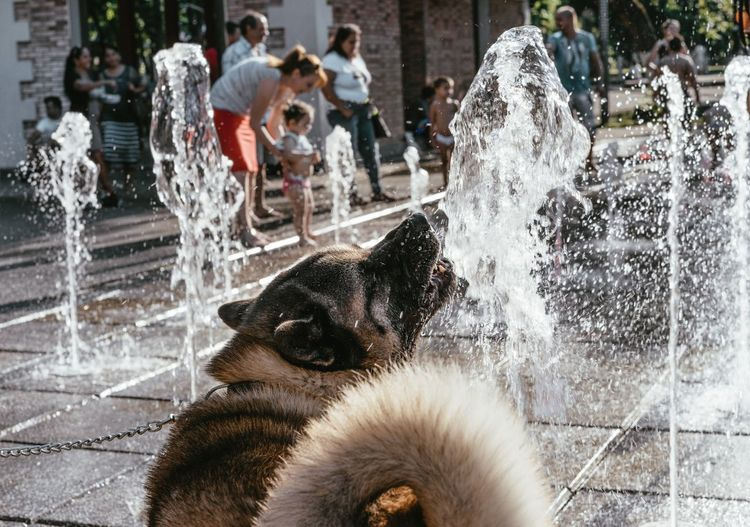 Dogs playing at fountain