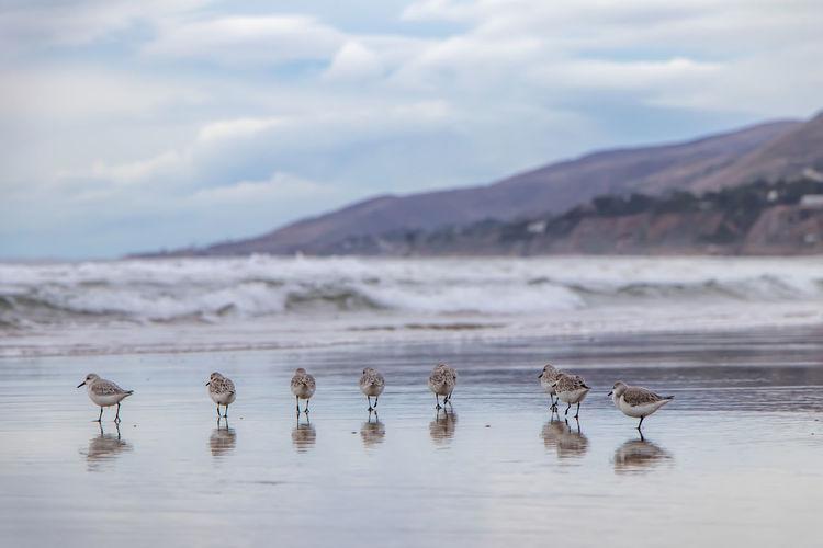 Sea birds in zuma beach