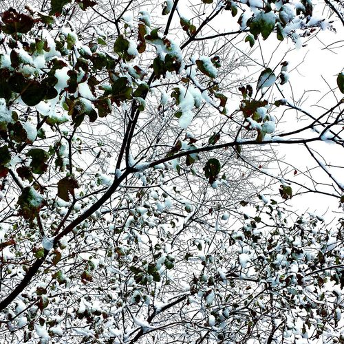 Ottawa Winter Trees