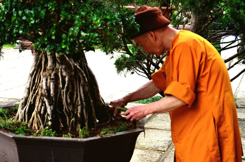 A monk tending to Bonsai plants in the Truc Lam pagoda in Da Lat Monk  Truc Lam Da Lat Bonsai Pagoda Vietnam Backpacking