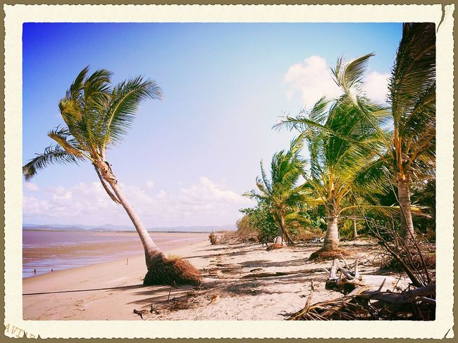 Melbourne Rocks Photography Postcard QLD Blissful Beach Mackay Enjoying Life Palm Tree Summer Wish I Were There