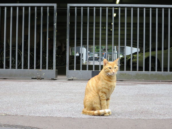 Cat Lovers Day Domestic Animals Domestic Cat Ginger Cat No People One Animal Outdoors Sitting Stray Cat