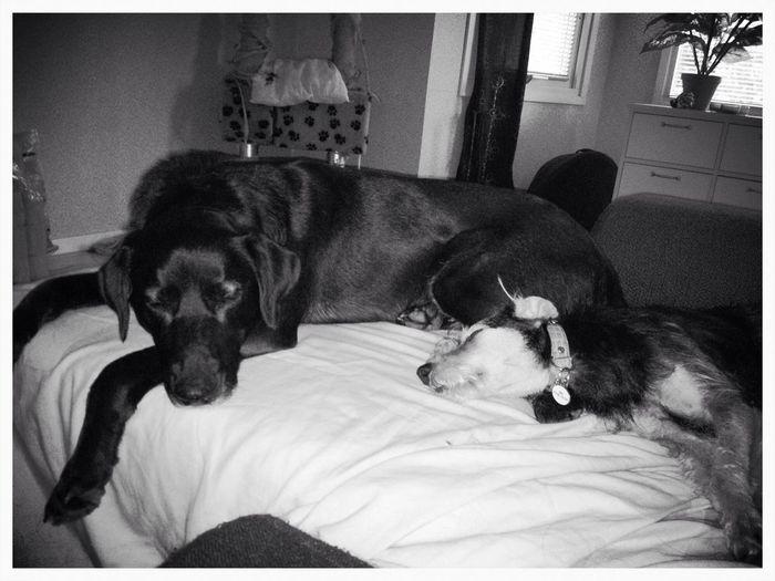 Tierddog  Mydogs Lovemydog