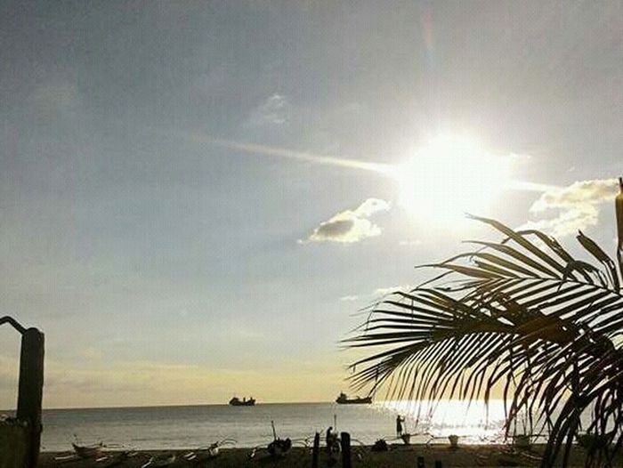 Sea Palm Tree