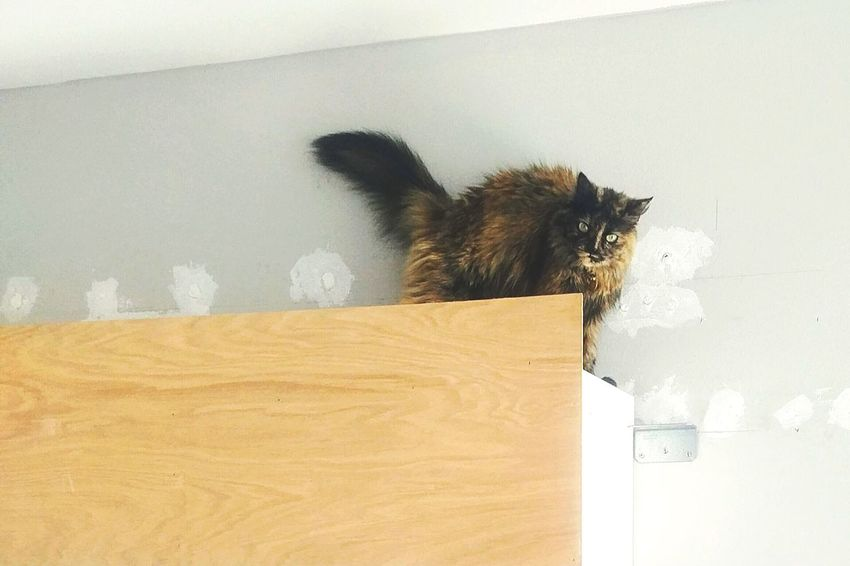 Cat up high Pets One Animal Animal Themes Domestic Animals Mammal Domestic Cat Indoors  No People Feline Day EyeEm EyeEm Gallery Cats Of EyeEm Cat Cat♡ Cat Lovers Pet Pet Photography  Furry Catsofinstagram Furry Friends Furbaby Fur Cats 🐱 Catoftheday