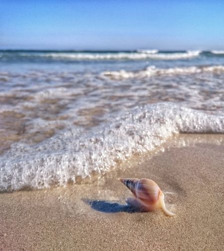 Snail Seaside Beach Nature Home Simplicity Sea Water