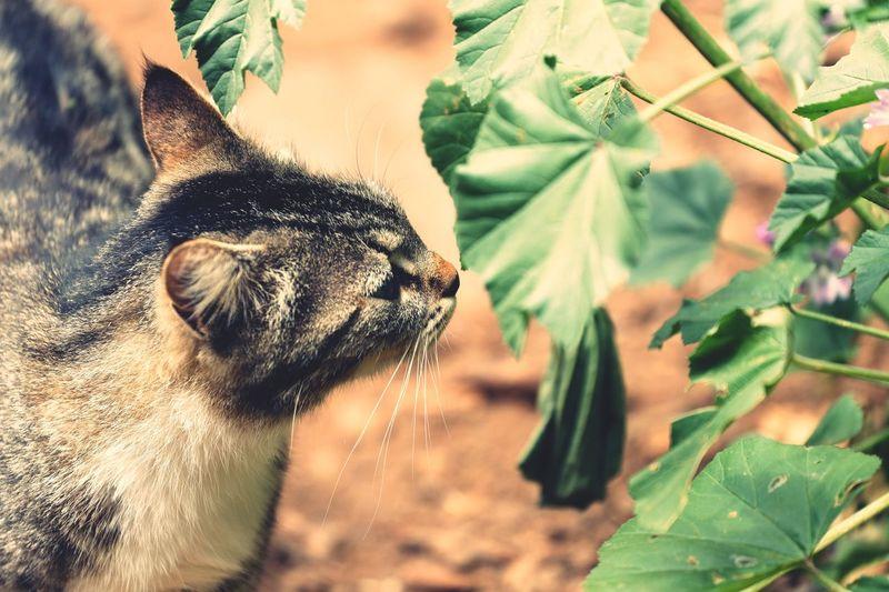 Cat One Animal Animal Themes Animal Mammal Domestic Animals Pets Leaf Nature