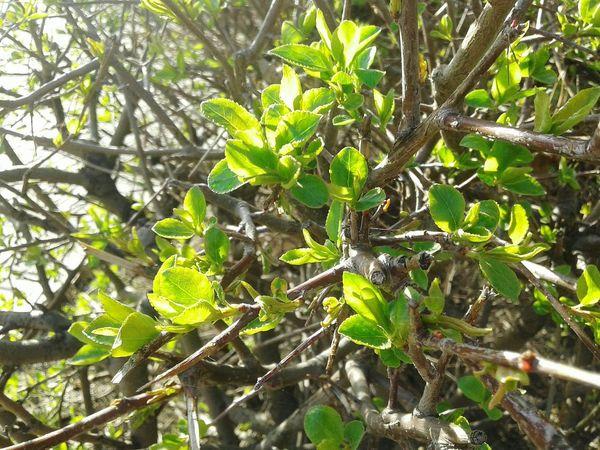 Green Kazakhstan. Plants