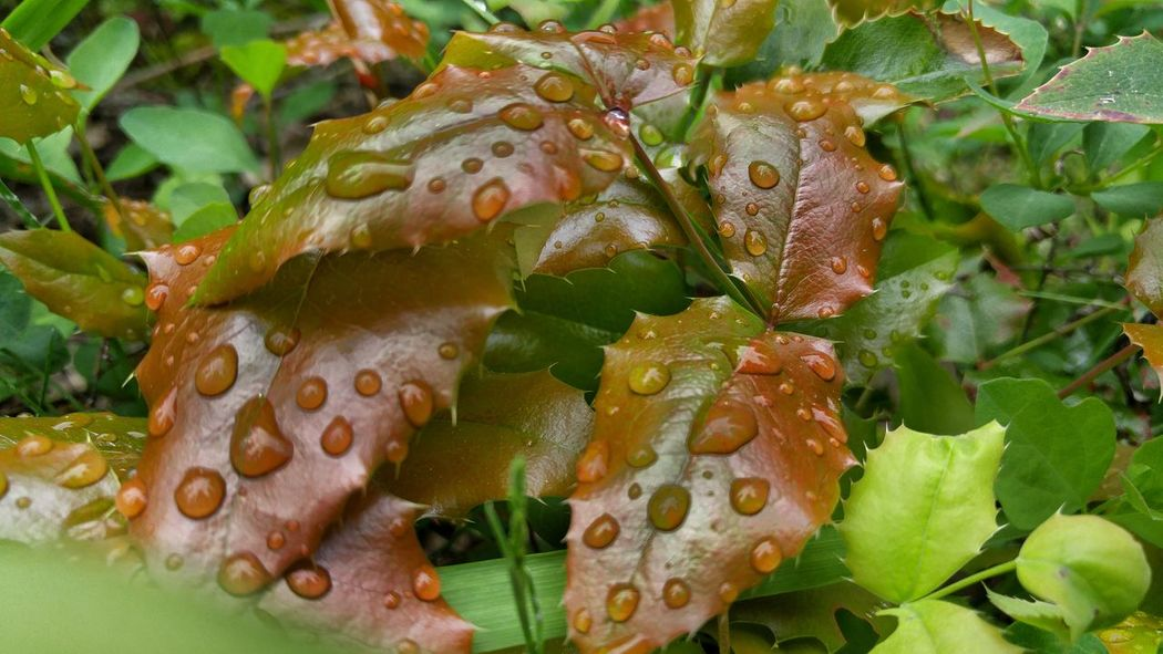 sploosh RainDrop Rain And Flower Close-up Green Color Plant Natural Pattern