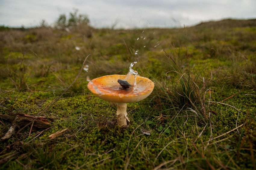 Okay, this one is a bit experimental, there was a puddle of water in the mushroom and dropped a bit of wood on top, it has a strange surrealistic look, can't figure out whether I like it or not ... et me know what you think! Close-up Drops Focus On Foreground Forest Fragility Fungus Mushroom Nature No People Selective Focus Water Water Drop