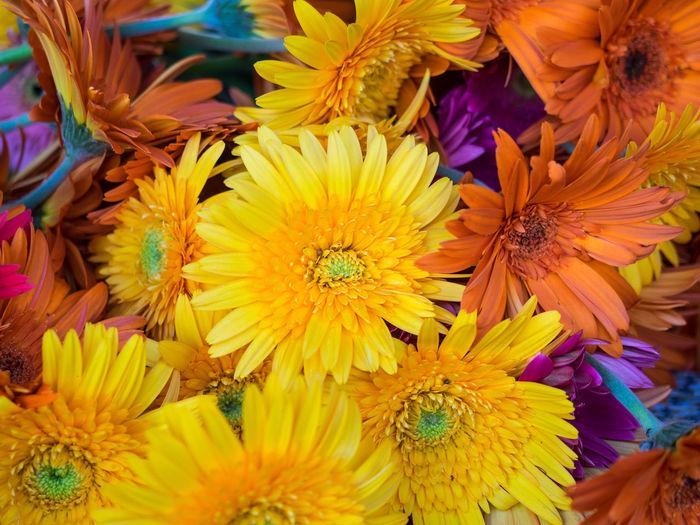 Full frame shot of gerbera daisies for sale at market