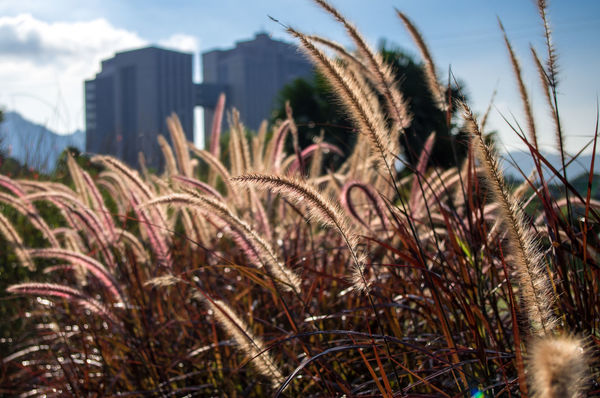 City Garden Cityscapes Day Garden Grass Nature Outdoors Plant Tranquility