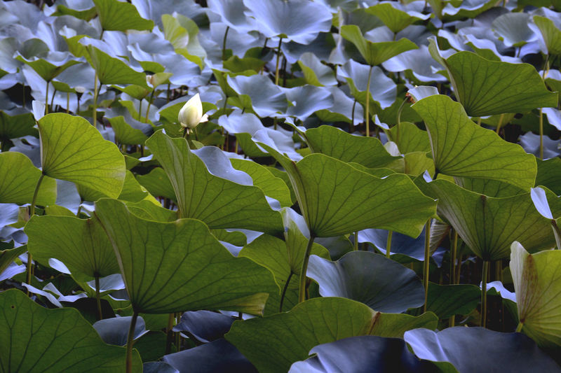 Close-Up View Of Green Leaves