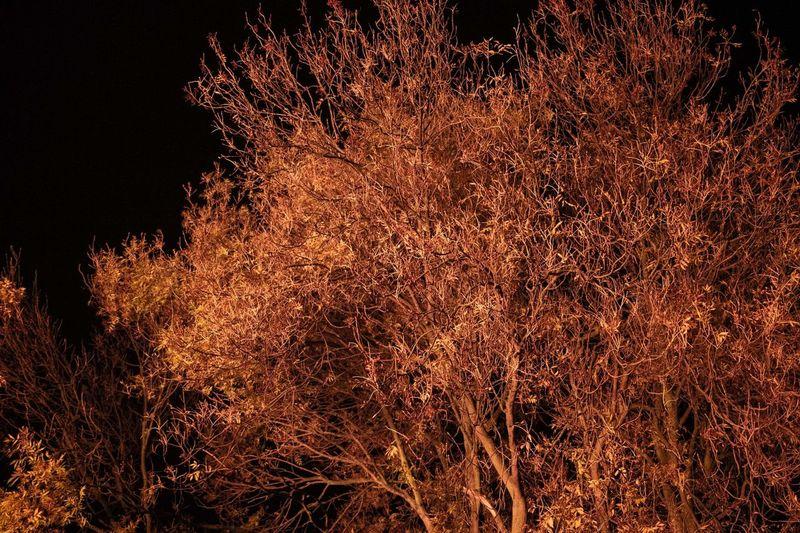 Tree Trees Fire