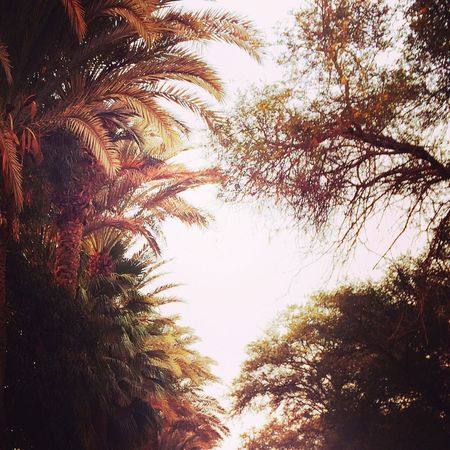Walking Around Trees And Sky Palm Trees Enjoying The Sights Extremely Blessed ❤