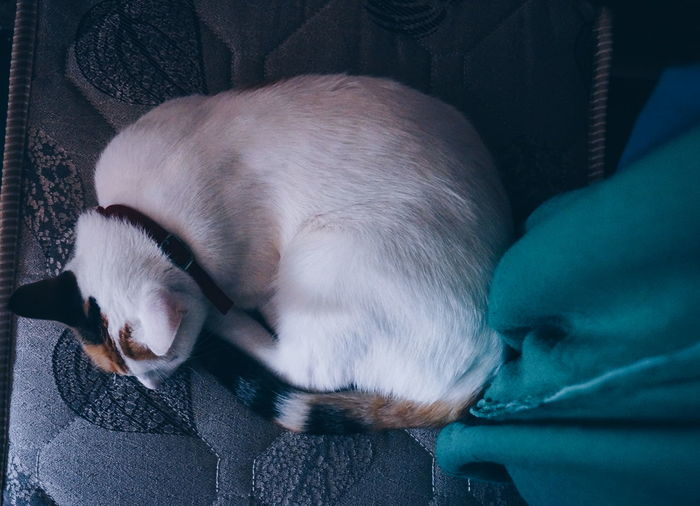 I will just take a Nap in here ZzzzzzZZzZ 💤 💤 😴 Sleeping Cat Pets Animal Themes Mammal Sleeping Cat Cats Cat Lovers Cat Lover Beautiful Beauty Love Meditation Relaxing Chilling Recharging Zenful High Angle View VSCO Vscocam Snapshots Of Life Shootermag Mobilephotography Cat Portrait