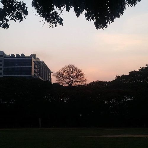 That one tree 😍 . . . Nature Note3 Samsung Sunset Followforfollow Tree Christuniversity Bengaluru Karnataka Bangalore Pleasant Dusk College Building New Instalike Instacool Instadaily Instamood Amazing Awesome Pleasant Lowexposure Autumn Deadleaves time new waitingonrain itwillrain orangesky