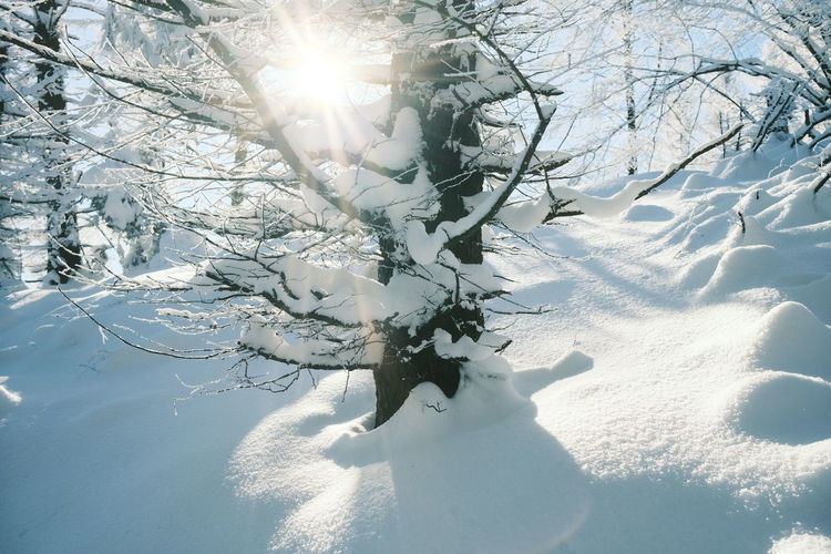 Snow covered bare tree against bright sun