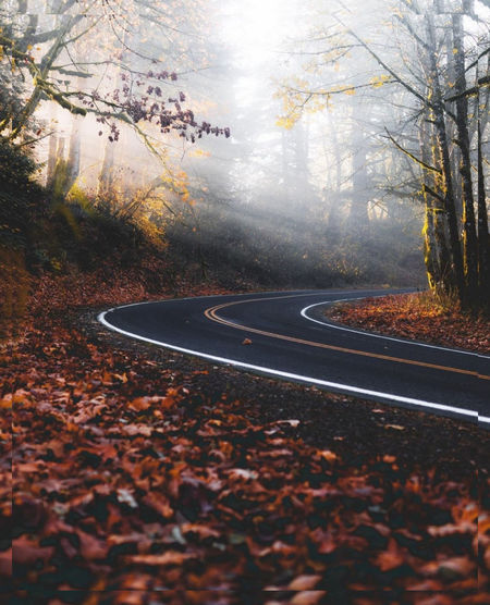 Autumn leaves by road in forest